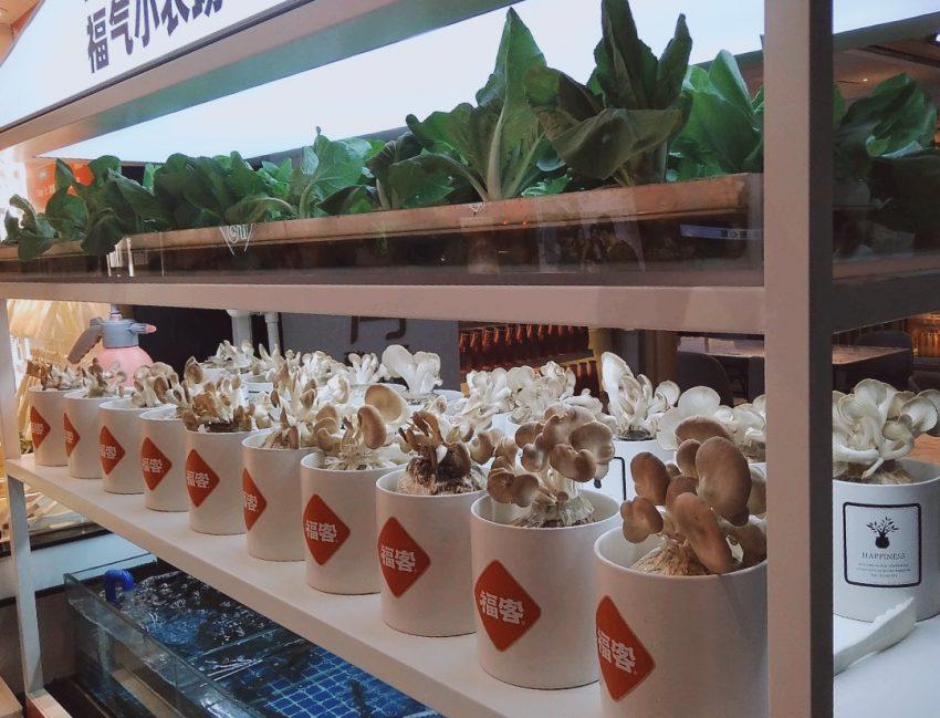 Mushrooms and hydroponics