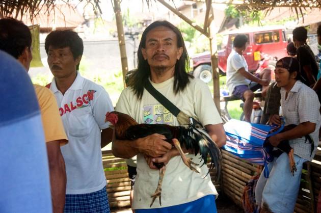 Петушиный бой на Бали