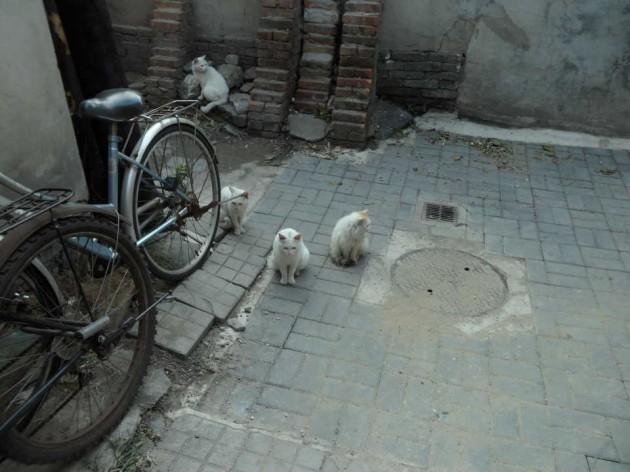 Хутуны в Пекине. Котики