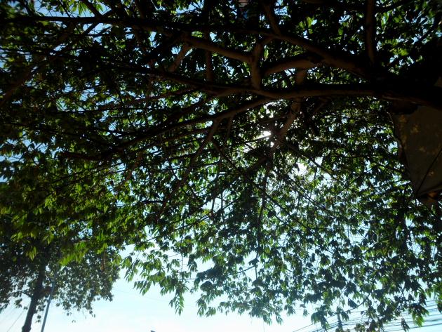 Достопримечательности Пномпеня в парке