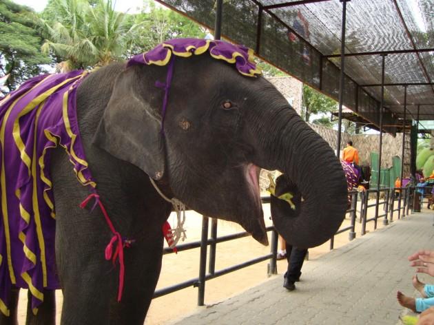 13 марта День слонов в Таиланде