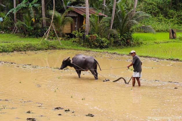 Самостоятельный мини-тур по острову Бохол