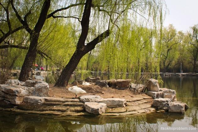 Зоопарк с пандами в Пекине