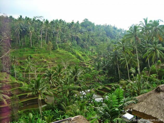 Рисовые поля. Бали. Индонезия