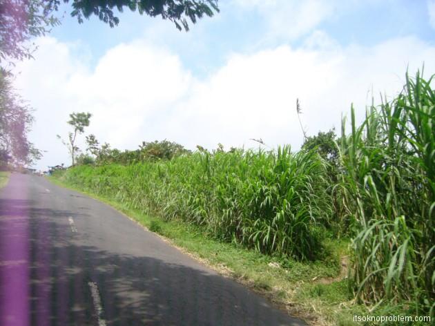 Дорога на Убуд. Бали. Индонезия