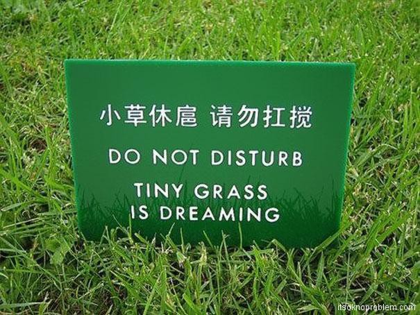 Do not disturb. Tiny grass is dreaming