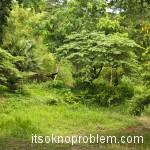 Найди гиббона в лесном парке в Ча-Аме