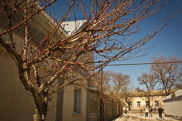 Крымская весна. Природа просыпается